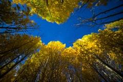 6K Astro Timelapse Low Angle of Aspen Fall Foliage in Eastern Sierra Stock Footage