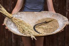 Caucasian woman holding tray with wheat and sickle Stock Photos