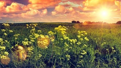 Summer landscape with wild flowers field at sunset. Nature background. Timelapse Stock Footage