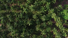 Aerial View of Palm Tree Grove on a Tropical Island Arkistovideo