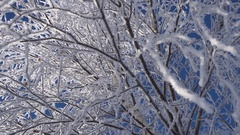 Christmas Ornaments Snowy Birch Branches in Hoarfrost,sun in the Frame Stock Footage