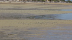 Thousands of soldier crabs walking on beach Stock Footage