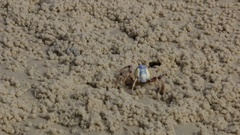 Close up of soldier crab walking on beach Stock Footage