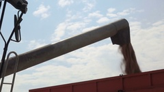 Grain of Wheat is Unloaded From a Combine Into a Truck Stock Footage