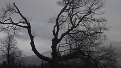 Time lapse of moody sky and bare tree Stock Footage