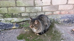 Street cat sitting next to a brick wall, day Stock Footage