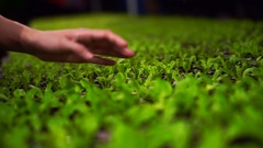 Hands caring for small farm plant in greenhouse at night Stock Footage