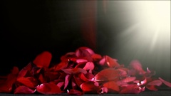Valentine falling red rose petals with lens flare Stock Footage