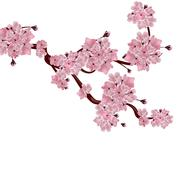 Lush Japanese cherry tree. The branch of pink cherry blossom. Isolated on w.. Stock Illustration