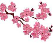Flowering Japanese cherry. Sprig of pink sakura blossoms isolated white bac.. Stock Illustration