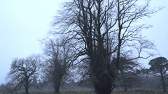 Bare trees in the rain Stock Footage