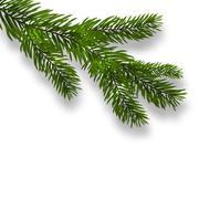 Green lush branch spruce and realistic shadows. Isolated white background. .. Stock Illustration