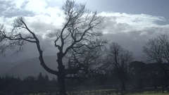 Bare trees with moody clouds 2 Stock Footage