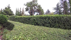 Decorative shrubs in park Stock Footage