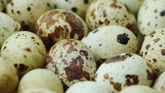 A lot of quail eggs. Healthy eating and diet Stock Footage