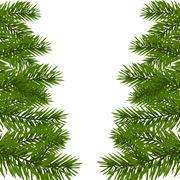 Green lush branch of spruce with the two sides. Fir branches. Isolated on w.. Stock Illustration
