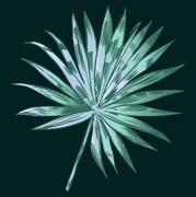Exotic flowers set. Botanical vector vintage illustration Stock Illustration