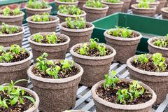 Pots with seedlings in botany garden. Stock Photos