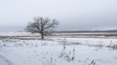 Dry the grass marsh winter reed beautiful cold landscape nature Stock Footage
