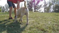 Young man and dog playing outdoor at nature. Labrador or golden retriever Stock Footage