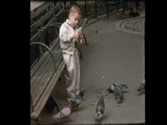 Cute blond boy feed pigeons in NYC park Stock Footage