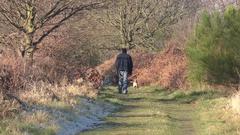 Dog walker English UK countryside winter Stock Footage