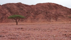 Red desert landscape of Sinai Mountains Stock Footage