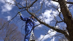Farmer pruning fruit tree twigs in orchard standing on high ladder Stock Footage