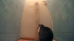 Cat playing with toilet paper and unrolling it in lavatory Stock Footage