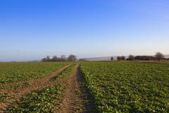 Canola crop and manure heap Stock Photos