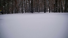 Happy Man Dives into the Deep Snow and Having Fun in the Winter Pine Forest Stock Footage