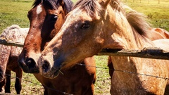 Closeup of young horses on green field. Farm animal background. 4k Stock Footage