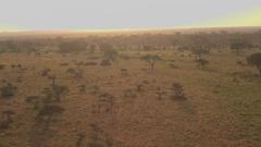AERIAL: Safari jeep game driving tourists past wild elephants walking in savanna Stock Footage