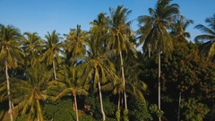 Sea landscape with the sea and palm trees.Aerial view:Camiguin island Stock Footage