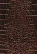 Reptile skin surface Stock Photos