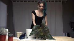 Beautiful cute girl with dyed blue hair carefully transplant the plants in pots Stock Footage