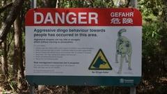 Danger Dingo sign on Fraser Island Stock Footage