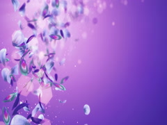 Flying Blurry Romantic Blue Purple Violet Flower Petals Placeholder Loop 4k Stock Footage