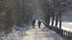 Couple walks in the park alley in winter Stock Footage