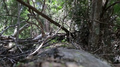 DOF Rainforest on Fraser Island Stock Footage
