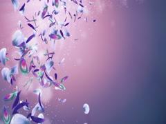 Flying Romantic Purple Green Blue Orchid Flower Petals Placeholder Loop 4k Stock Footage
