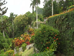View to botanical garden in tropical jungle at summer sunny day Stock Footage