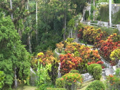 View to botanical garden in tropical forest jungle at summer sunny day Stock Footage