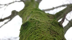 A Shallow Depth of Field Focused on the Moss on a Tree Trunk in the Park While Stock Footage