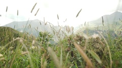 Flying through the grass. Landscape moutains panorama Stock Footage