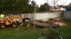 Heavy machinery removing large tree trunks Stock Footage