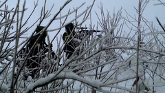 Military weapons in the winter woods Stock Footage