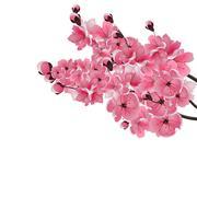Japanese sakura. Three lush branch dark pink cherry blossom close-up. Isola.. Stock Illustration