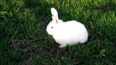 White rabbit on the grass Stock Footage
