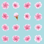 Sakura flowers icon set isolated. EPS 10 Stock Illustration